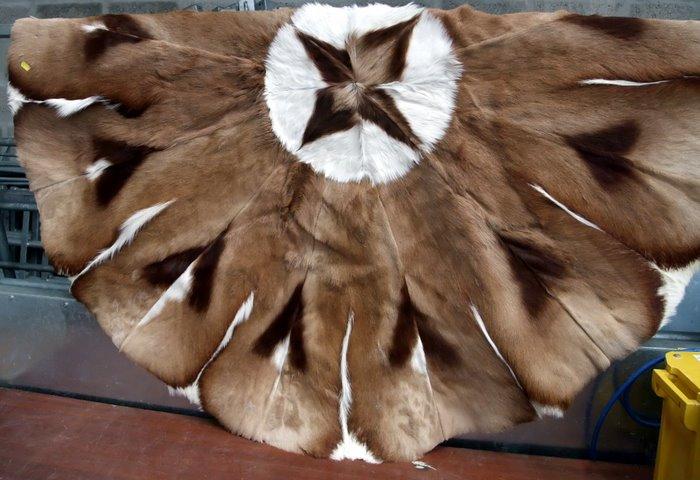 Lot 212   Deer Skin Rug £75